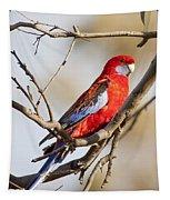 Crimson Rosella 1 - Australia Tapestry