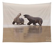 Rough Courtship Of Male And Female Hookers Sealions Tapestry