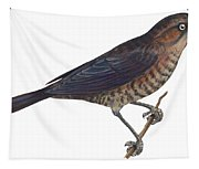 Rusty Blackbird  Tapestry