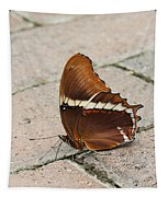 Rusty Tipped Page Butterfly Tapestry