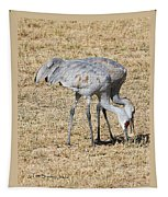 Sand Hill Cranes Eat Togeather Tapestry