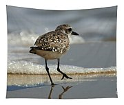 Sanderling Gulf Of Mexico Tapestry