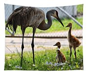 Sandhill Babies Tapestry