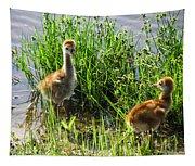 Sandhill Crane Chicks  Tapestry