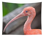 Scarlet Ibis 1 Tapestry
