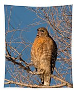Screeching Red-shouldered Hawk Tapestry
