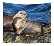 Sea Lion Pup Tapestry