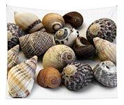 Sea Shells Tapestry