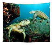 Sea Turtle Oil On Canvas Tapestry