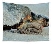 Sea Turtle Heading Back To Sea  Tapestry
