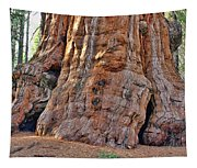 Sequoia Tree Base Tapestry