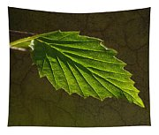Shadows And Light Of The Leaf Tapestry