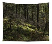 Shadows Of Color Tapestry
