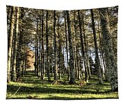 Shadows Of The Larch Forest Sunset No2 Tapestry