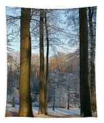Light And Shadows In Wintertime Tapestry
