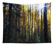 Shining Through Tapestry