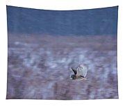 Short Eared Owl Hunting 3 Tapestry