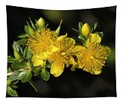 Shrubby St Johnswort Dsmf094 Tapestry