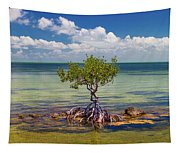 Single Mangrove Tree In The Gulf Tapestry