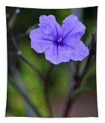 Single Purple Mexican Petunia Ruellia Brittoniana Tapestry