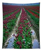 Skagit Valley Tulips Tapestry