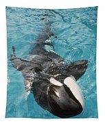 Skana Orca Vancouver Aquarium Pat Hathaway Photo1974 Tapestry