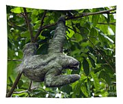 Sloth 8 Tapestry