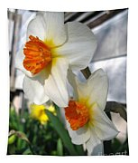 Small-cupped Daffodil Named Barrett Browning Tapestry