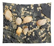 Snail Family Vacation Tapestry