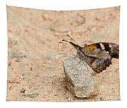 Snout Butterfly  Tapestry