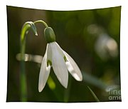 Snowdrop Tapestry
