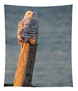 Snowy Owl At The Seashore Tapestry