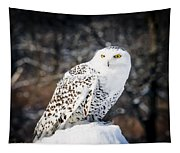 Snowy Owl Cold Stare Tapestry