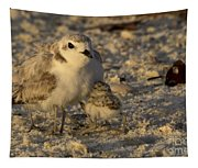 Snowy Plover Transforms Into A Spiderbird 5 Tapestry