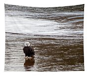 Solitary Eagle Tapestry