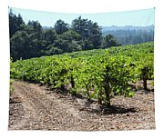 Sonoma Vineyards In The Sonoma California Wine Country 5d24512 Tapestry