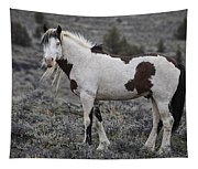 South Steens Wild Stallion Tapestry