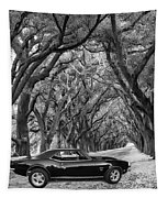 Southern Muscle Tapestry