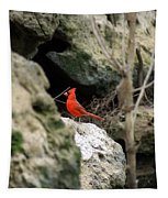 Southern Red Bird By The Flint River Tapestry