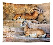 Spanish Ibex Tapestry