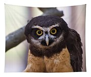 Spectacled Owl Tapestry