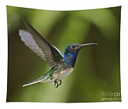 Spread Your Wings... Tapestry