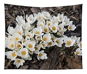 Springtime Abundance - A Bouquet Of Pure White Crocuses Tapestry