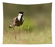 Spur-winged Lapwing Tapestry