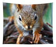 Squirrel Close-up Tapestry