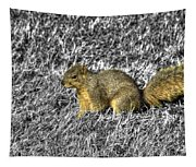 Squirrling Around Looking For Nuts Tapestry