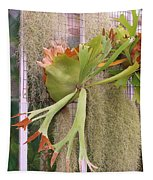 Staghorn Fern Tapestry