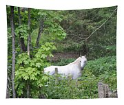 Stallion On Independence Day Tapestry