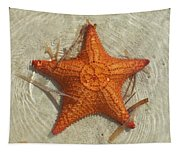 Starfish 1 Of Bottom Harbour Sound Tapestry