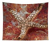 Starfish In Soft Coral Tapestry